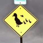 動物をはねてしまったら? 法的責任と自動車保険適用の可否